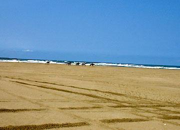 砂浜を駆ける馬